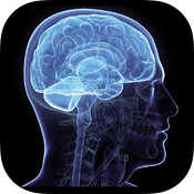 Brain Test free memory game